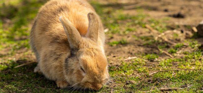 Comment bien prendre soin de son lapin ?